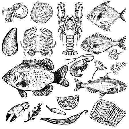 手描きシーフード イラスト白い背景で隔離のセットです。魚、カニ、ロブスター、カキ、エビ。スパイス。メニューのデザイン ポスター。ベクトル  イラスト・ベクター素材