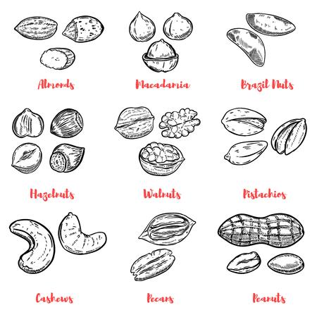Set van noten illustraties. Ontwerpelementen voor poster, menu. Vector illustratie
