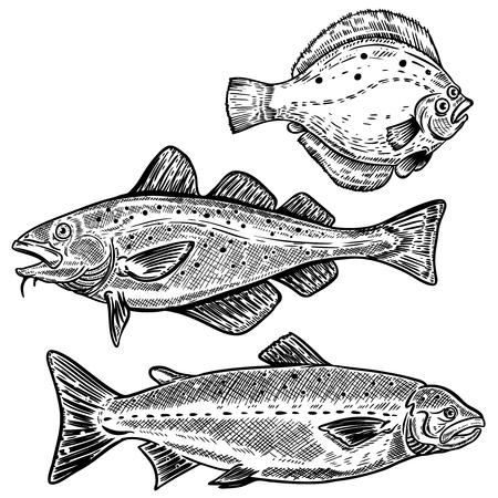 대구, 연어, 넙치 물고기 그림 흰색 배경에 고립. 포스터, 메뉴 디자인 요소입니다. 벡터 일러스트 레이 션