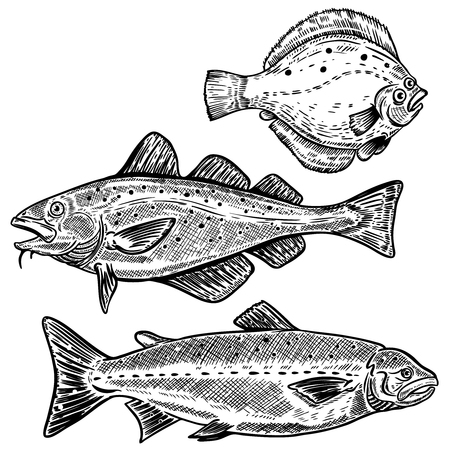 Kabeljauw, Zalm, Flounder vis illustraties geïsoleerd op een witte achtergrond. Ontwerpelementen voor poster, menu. Vector illustratie Stock Illustratie