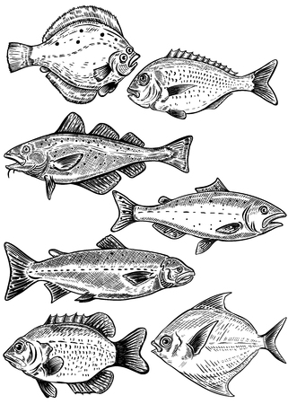 Fish illustrations isolated on white background. Fresh seafood. Vector illustration.