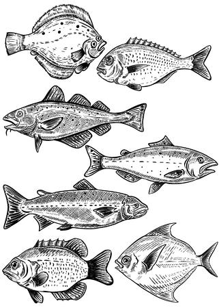 Vis illustraties geïsoleerd op een witte achtergrond. Vers zee-eten. Vector illustratie. Stock Illustratie