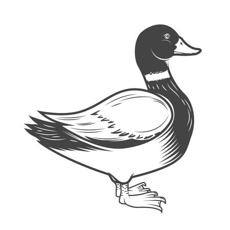 白い背景で隔離の鴨図。ロゴ、ラベル、紋章、記号の要素をデザインします。ベクトル図