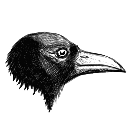 Crow head isolated on white background. Vector illustration