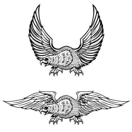 goshawk: Eagle illustrations isolated on white background. Vector illustration Illustration