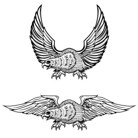 Eagle illustrations isolated on white background. Vector illustration Illustration