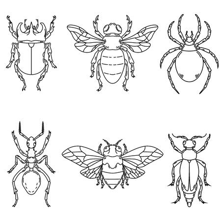 Set of beetle illustrations isolated on white background. Design elements for logo, label, emblem, sign. Vector illustration.