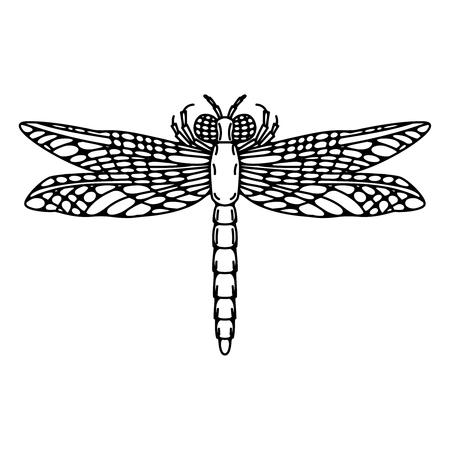 Dragonfly illustration isolated on white background. Vector illustration
