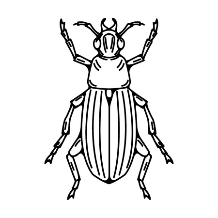 Beetle illustration isolated on white background. Vector illustration