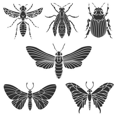 Set of beetle illustrations isolated on white background.