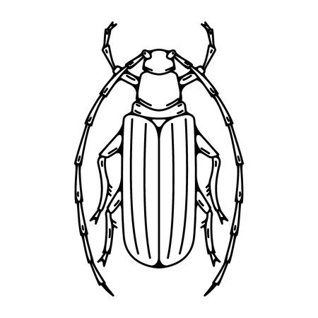 Käferabbildung getrennt auf weißem Hintergrund. Vektor-Illustration
