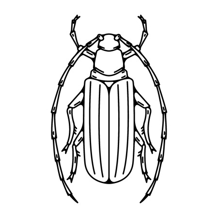 Beetle illustration isolated on white background. Vector illustration