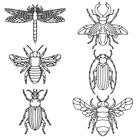 흰색 배경에 고립 된 딱정벌레 삽화의 집합입니다.