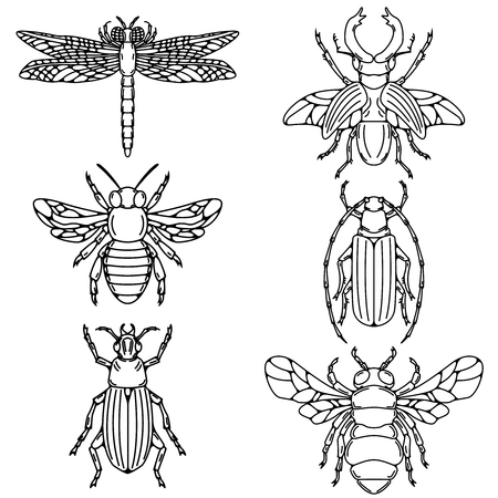 Set of beetle illustrations isolated on white background.