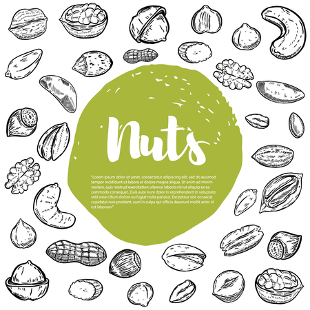 Cashew, hazelnut, walnut, pistachio, pecan nuts. Nuts sketches . Design elements for menu, banner, flyer. Vector illustration