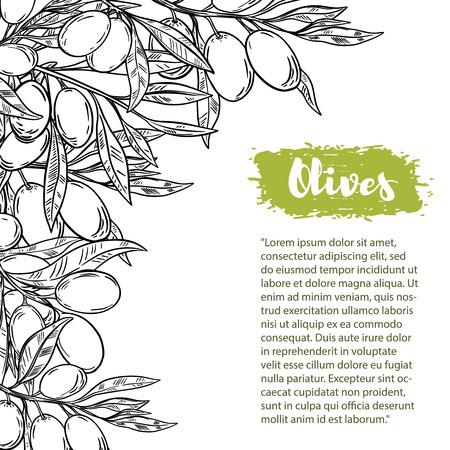 Frontière de vecteur avec des olives colorées. Le modèle avec un espace pour le texte. Pour le flyer, brochure pour la publicité et le design. Banque d'images - 87541017