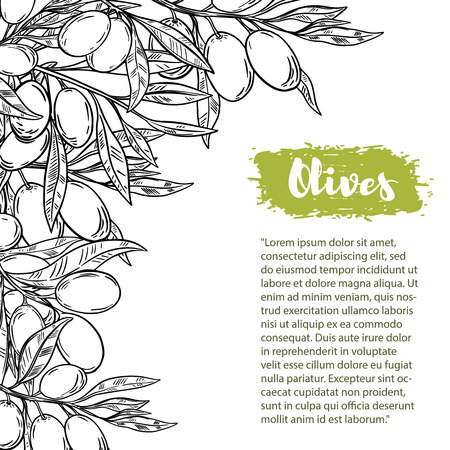 Vector border with colorful olives. The pattern with space for text. For flyer, booklet for advertising and design.