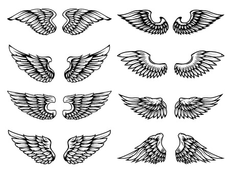 Set of vintage wings illustrations isolated on white background.