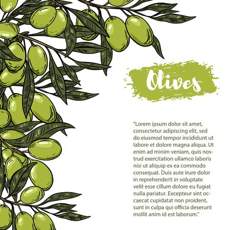 Olives. Flyer template with border from olive branch. Design element for poster, flyer, banner. Vector illustration Illustration