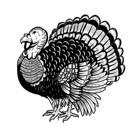 Illustrazione della Turchia isolato su sfondo bianco. Tema del Ringraziamento Elemento di design per poster, carta, banner. Illustrazione vettoriale Vettoriali