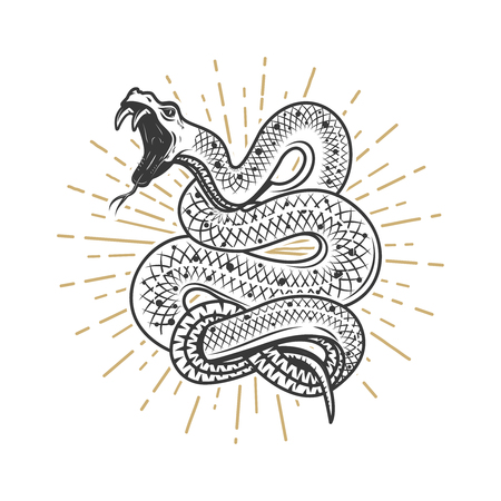 Viper snake illustration on white background. Design element for poster, emblem, sign. Vector illustration