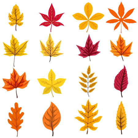 Set of autumn leaves isolated on white background. Vector design element Çizim