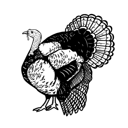 Illustration of the turkey isolated on white background. Thanksgiving theme. Design element for poster, emblem, sign, card, banner. Vector illustration