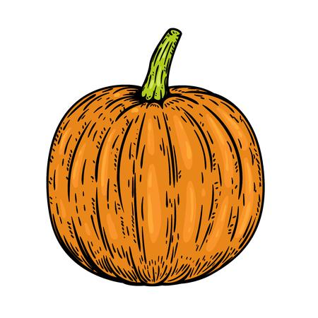 Pumpkin illustrations isolated on white background. Design elements for emblem, sign, poster, banner, card. Vector illustration