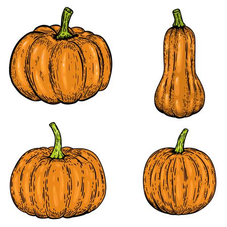 Set of pumpkin illustrations isolated on white background. Design elements for emblem, sign, poster, banner, card. Vector illustration Illusztráció