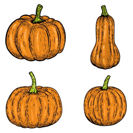 Set of pumpkin illustrations isolated on white background. Design elements for emblem, sign, poster, banner, card. Vector illustration Illustration