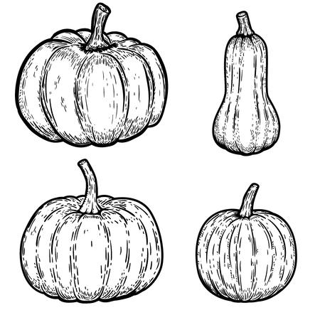Set of pumpkin illustrations isolated on white background. Design elements for emblem, sign, poster, banner, card. Vector illustration 向量圖像