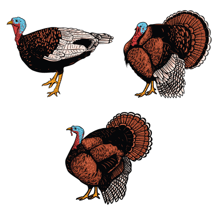 Set of turkey illustrations isolated on white background. Design elements for emblem, sign, poster, banner, card. Vector illustration