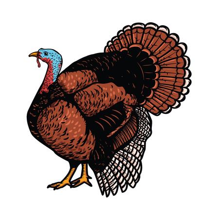 白い背景に分離されたトルコのイラスト。感謝祭のテーマ。ポスター、紋章、記号、カード、バナーの要素をデザインします。ベクトル図