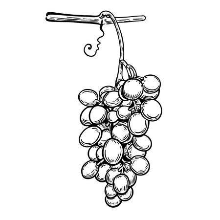 Grape in engraving style. Design element for poster, card, banner. Vector illustration Illustration