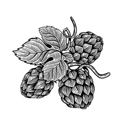 Beer hop illustration in engraving style. Design element for poster, card, banner. Vector illustration