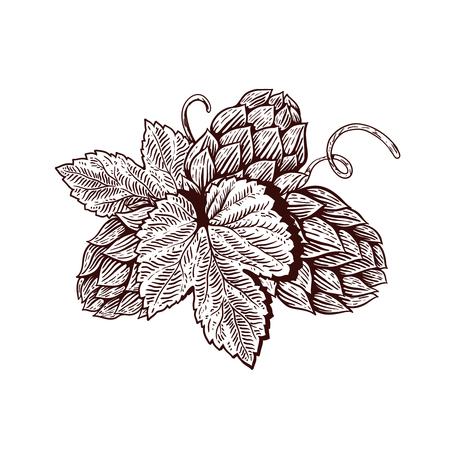 Beer hop illustration in engraving style. Design element for poster, card, banner. Vector illustration Imagens - 91004595