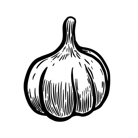Hand drawn garlic illustration. Design elements for poster, menu, banner, menu. Vector illustration