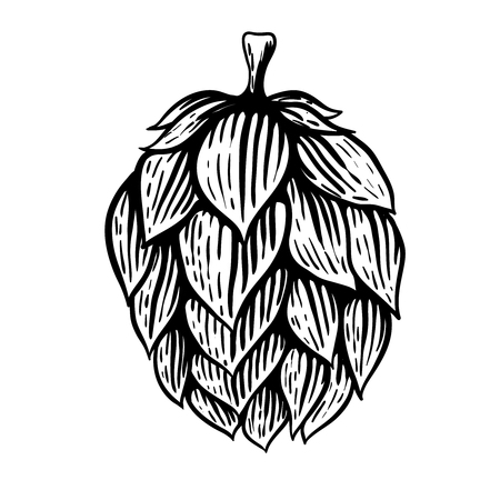 Illustrazione del luppolo della birra nello stile dell'incisione isolata su fondo bianco. Elemento di design per etichetta, emblema, segno, poster, etichetta. Illustrazione vettoriale