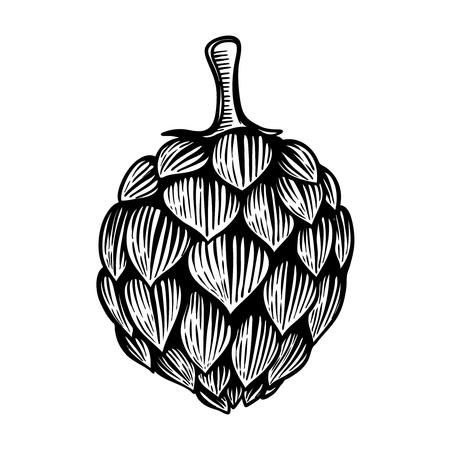 Beer hop  or fruit illustration in engraving style isolated on white background. Design element for label, emblem, sign, poster, label. Vector illustration Ilustração