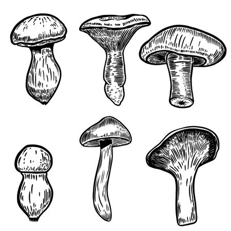 Set of hand drawn mushrooms illustrations isolated on white background. Design elements for poster, emblem, sign, label, menu. Vector illustration Ilustração