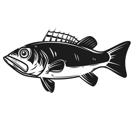 Sea bass icon. Perch illustration. Design element for label, emblem, sign, banner, poster. Vector illustration