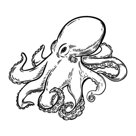 Hand drawn octopus illustration isolated on white background. Design element for menu, poster, emblem, sign. Vector illustration.