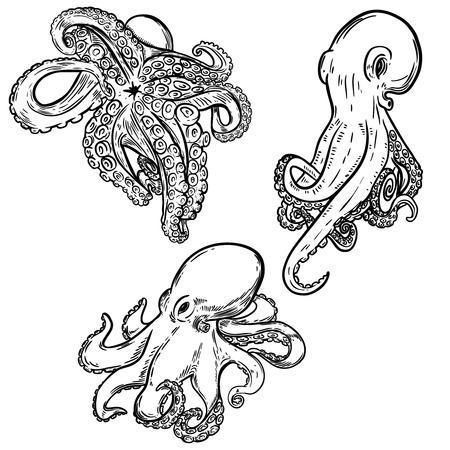 Set of octopus illustration isolated on white background. Design element for menu, poster, emblem, flyer. Vector illustration.