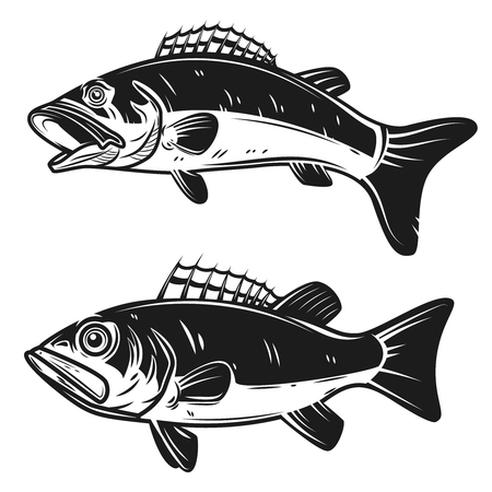 Set of bass fish illustrations isolated on white background. Design elements for logo, label, emblem, sign. Vector illustration