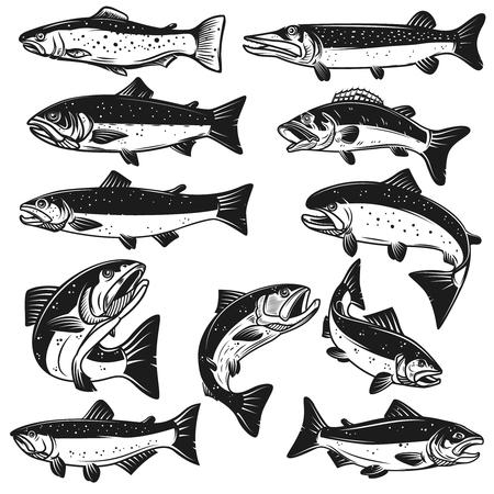 Duży zestaw ilustracji ryb.
