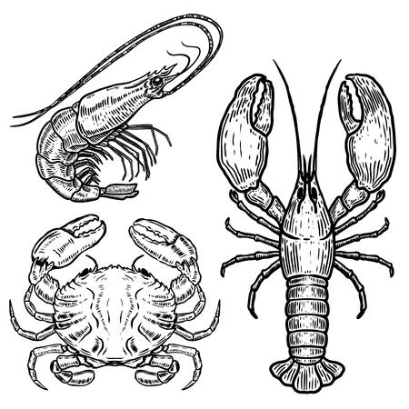 Hand drawn lobster, crab, shrimp illustrations on white background. Design elements for poster, emblem, sign, badge, menu.