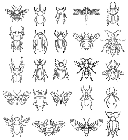 Set of insects illustrations on white background. Design elements for icon, label, emblem, sign, badge.