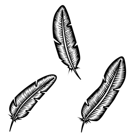 Set of feather on white background