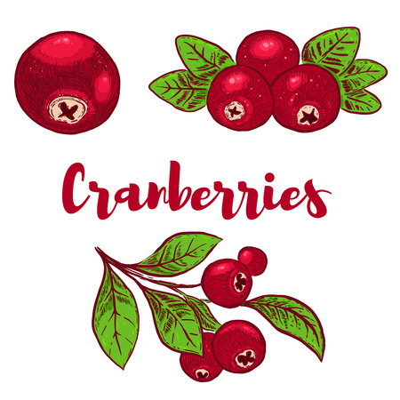 Set of hand drawn colorful Cranberries illustrations. Design element for poster, card,. menu, sign. Vector image