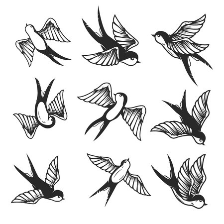 Set of swallow illustrations on white background.